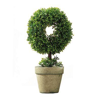 Pianta Bonsai verde: prezzi e offerte online