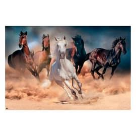 Poster Five horses 91,5 x 61 cm