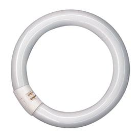 Circolina fluorescente Osram GQ10 22W luce fredda