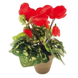 Fiore ciclamino vaso 11 rosso