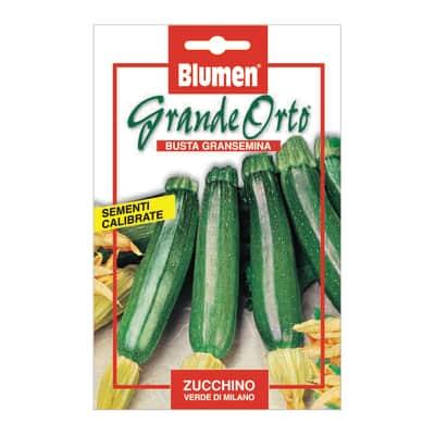 Seme per orto zucchino verde di milano